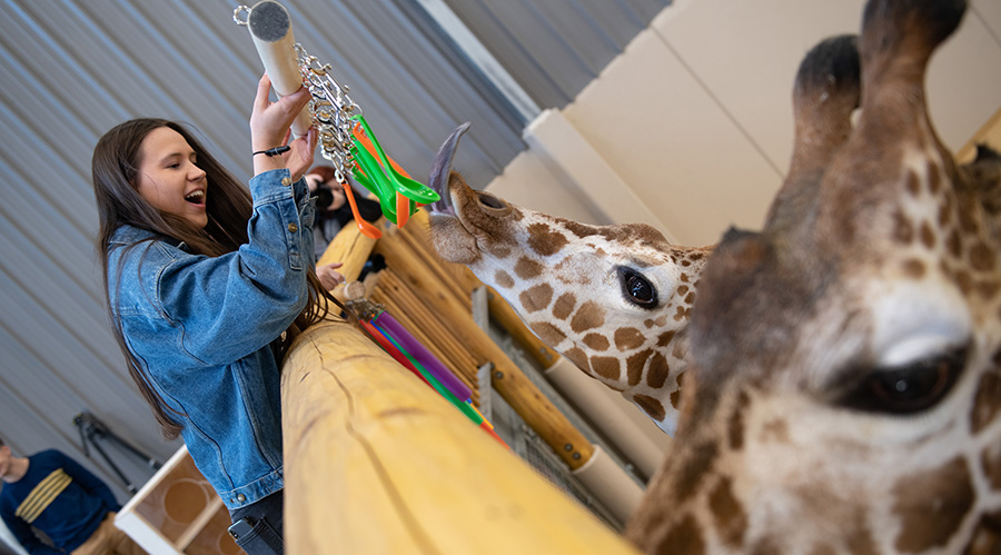 Engineering students designing toys for giraffes in local zoo