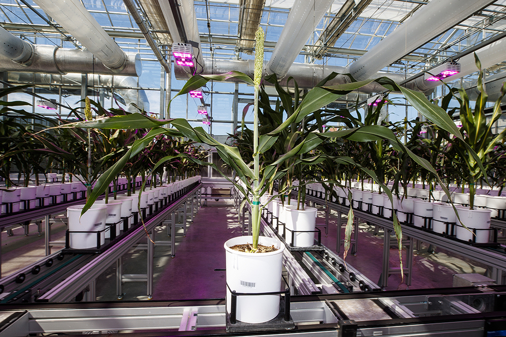 Yufeng Ge has received a $3 million grant from the U.S. Department of Agriculture's National Institute of Food and Agriculture to lead a team of researchers from three universities in expanding and standardizing plant phenotyping. (University Communication)