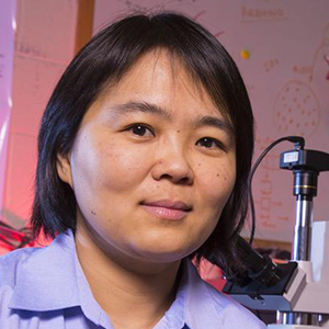Linxia Gu, associate professor of mechanical and materials engineering, is lead author in a study that examines how improvised explosive devices impact blood vessel networks and can lead to traumatic brain injury.  (Photo by Craig Chandler / University Communications)