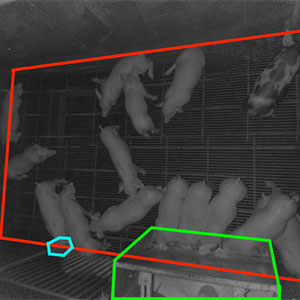 Through the use of a 3-D camera, a team of computer engineering and computer science students is developing an application that will allow farm workers to monitor the health of individual pigs.
