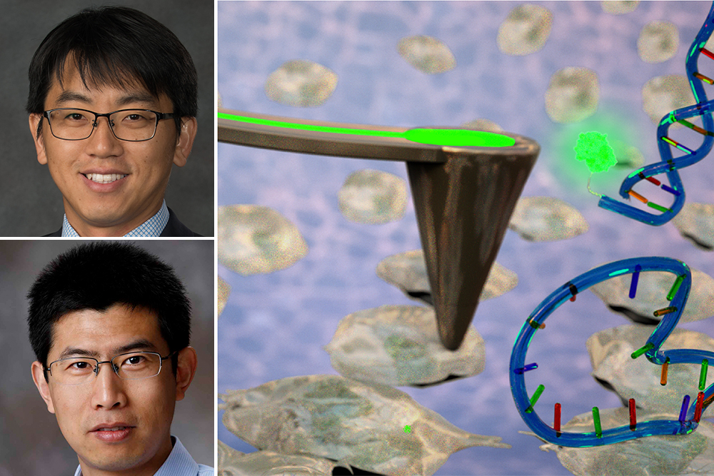 Jae Sung Park (top) and Ruiguo Yang, each an assistant professor of mechanical and materials engineering, are working to improve drug delivery systems by applying electrical charges to cell surfaces.