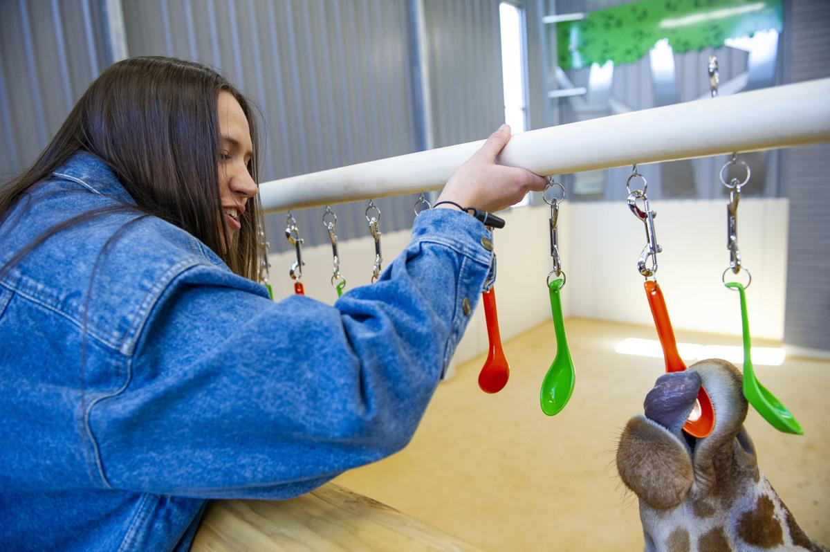 Engineering student Zoe Jirovsky watches as one of the giraffes plays with the hanging spoons toy created by Nebraska Engineering's Theme Park Design Group. (Lincoln Journal Star photo)