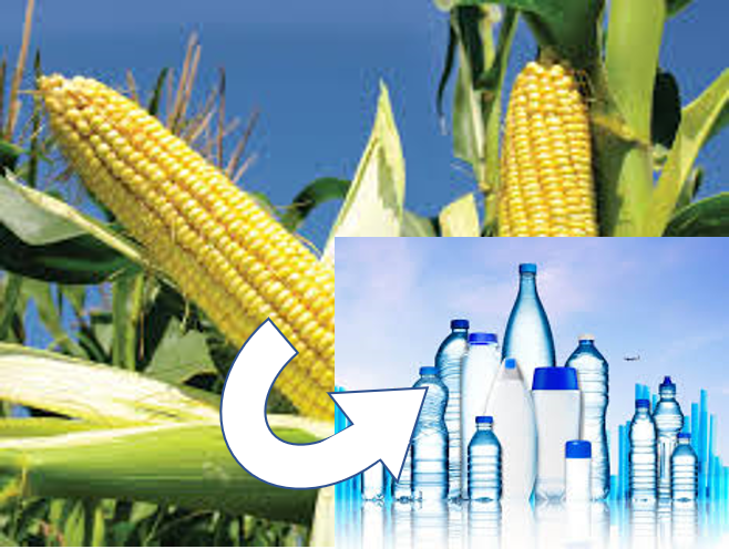 The Nebraska Corn Board awards funding to the Systems and Synthetic Biology Research group to develop high value plastics from corn fiber.  This project will use both computational and wet-lab approaches to apply metabolic engineering strategies to B. sacchari, resulting in an industrially useful strain that will benefit the environment as well as relevant stakeholders such as bioprocessing plants and members of the agricultural community.