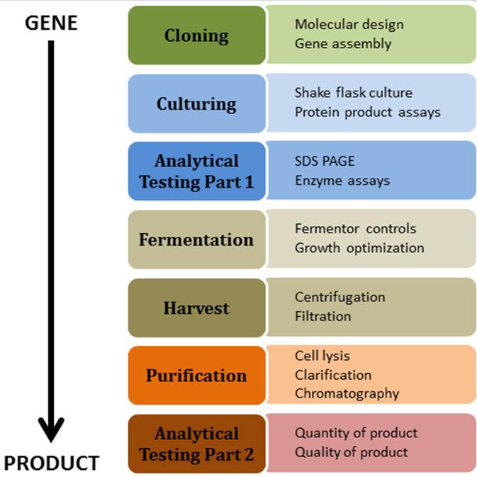bio process chart