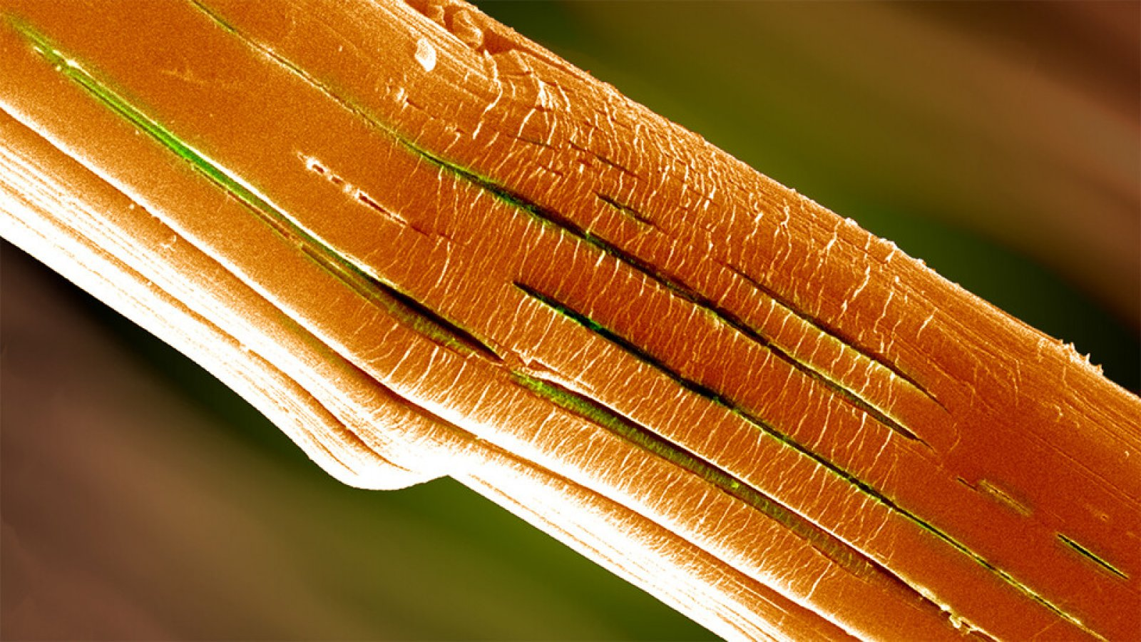 A microscopic view of a high-performance polymer fiber after bending. Analysis by Yuris Dzenis and his team, and the new technique that yielded it, could inform the design of more-resistant, longer-lasting fibers.